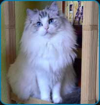 IC Faith N Hope Azrag Bey, CZ<br />RAG n 03 21 (high mitted)